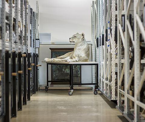 Melbourne Museum: Interim Collections Storage